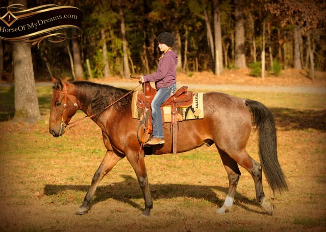 007-Rebel-AQHA-Bay-Roan-Gelding-For-Sale