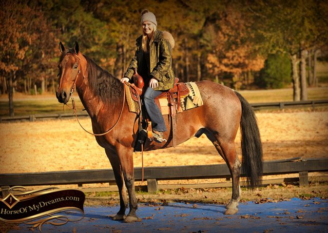 008-Rebel-AQHA-Bay-Roan-Gelding-For-Sale