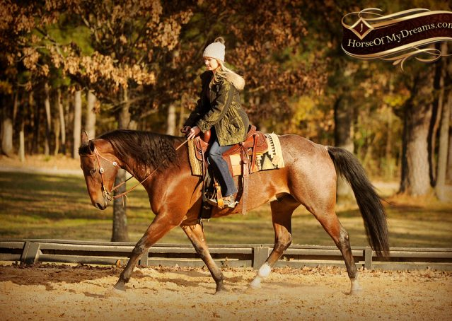 009-Rebel-AQHA-Bay-Roan-Gelding-For-Sale
