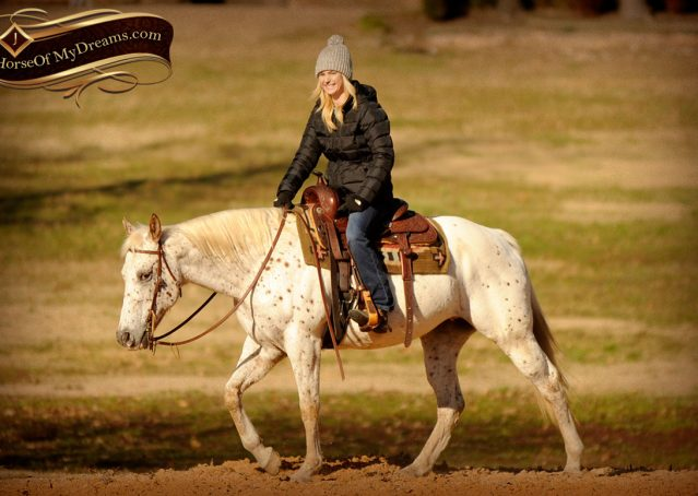 011-Lacey-Appaloosa-Mare-For-Sale