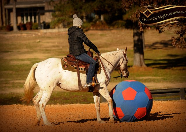 015-Lacey-Appaloosa-Mare-For-Sale