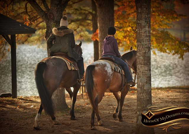 017-Rebel-AQHA-Bay-Roan-Gelding-For-Sale