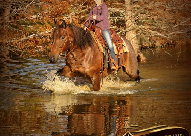 019-Rebel-AQHA-Bay-Roan-Gelding-For-Sale