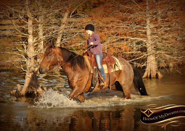 020-Rebel-AQHA-Bay-Roan-Gelding-For-Sale
