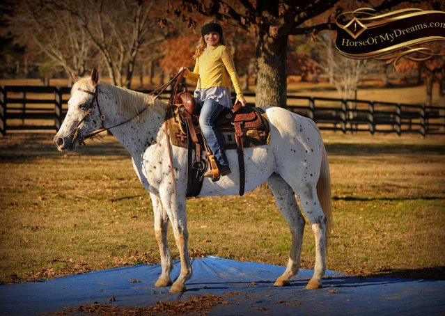 021-Lacey-Appaloosa-Mare-For-Sale