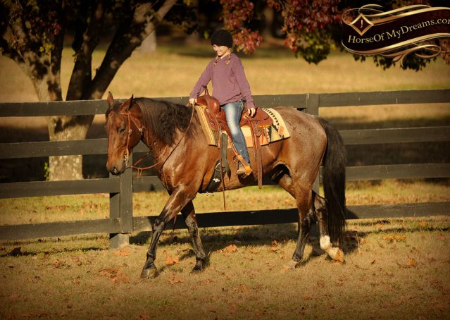 021-Rebel-AQHA-Bay-Roan-Gelding-For-Sale