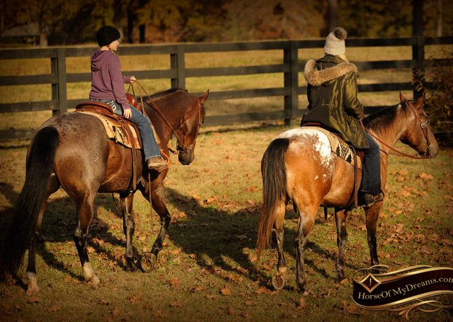 022-Rebel-AQHA-Bay-Roan-Gelding-For-Sale