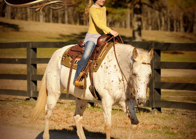 025-Lacey-Appaloosa-Mare-For-Sale