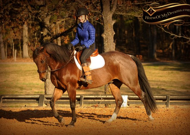 026-Rebel-AQHA-Bay-Roan-Gelding-For-Sale