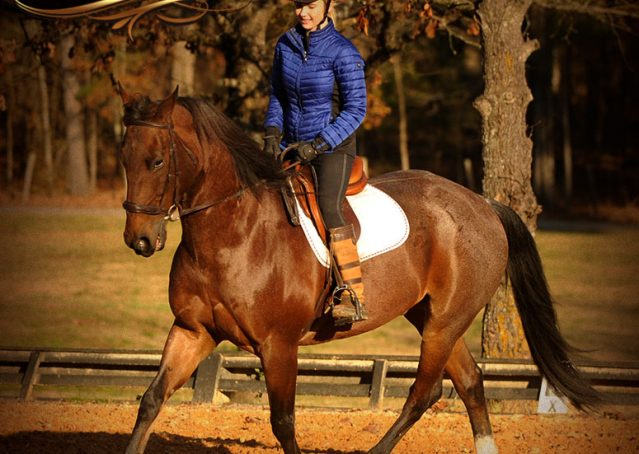 027-Rebel-AQHA-Bay-Roan-Gelding-For-Sale