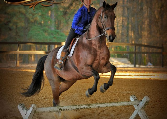 029-Rebel-AQHA-Bay-Roan-Gelding-For-Sale