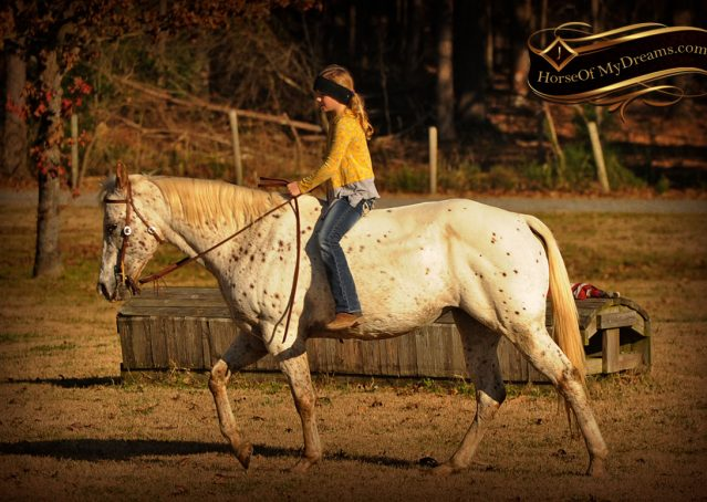 033-Lacey-Appaloosa-Mare-For-Sale
