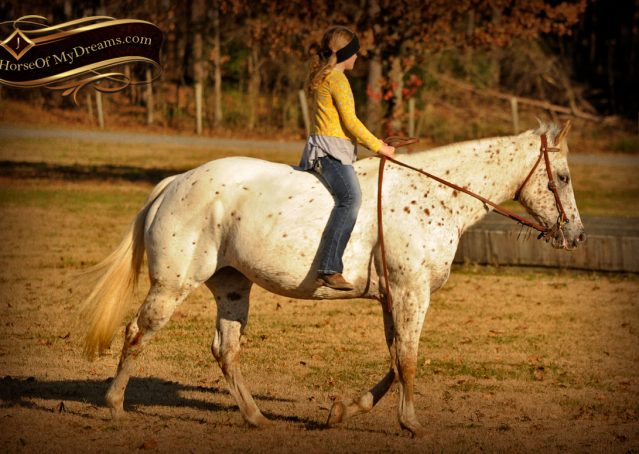 034-Lacey-Appaloosa-Mare-For-Sale