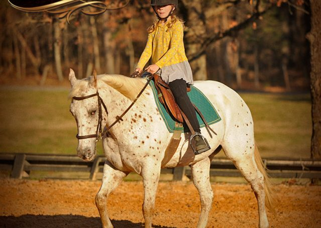 035-Lacey-Appaloosa-Mare-For-Sale