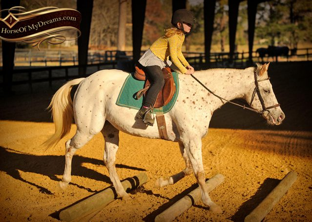 037-Lacey-Appaloosa-Mare-For-Sale