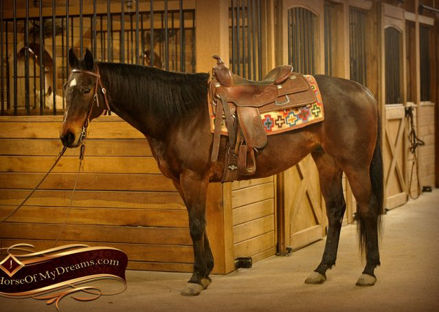 001-Jody-AQHA-Bay-Gelding-For-Sale