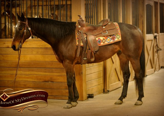 004-Jody-AQHA-Bay-Gelding-For-Sale