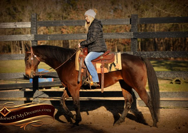 006-Jody-AQHA-Bay-Gelding-For-Sale