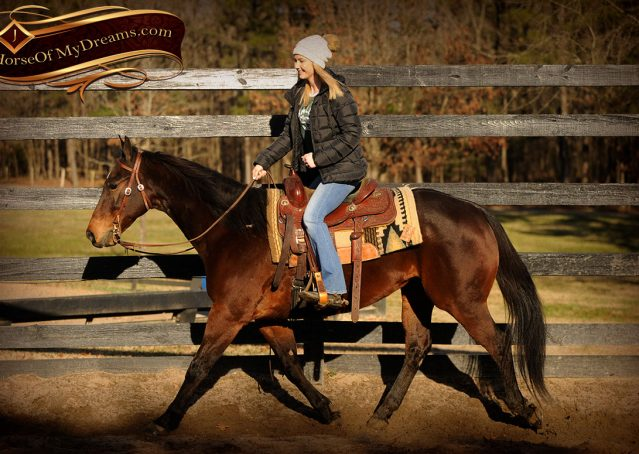 007-Jody-AQHA-Bay-Gelding-For-Sale
