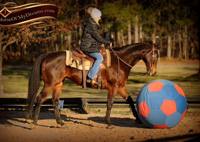 011-Jody-AQHA-Bay-Gelding-For-Sale