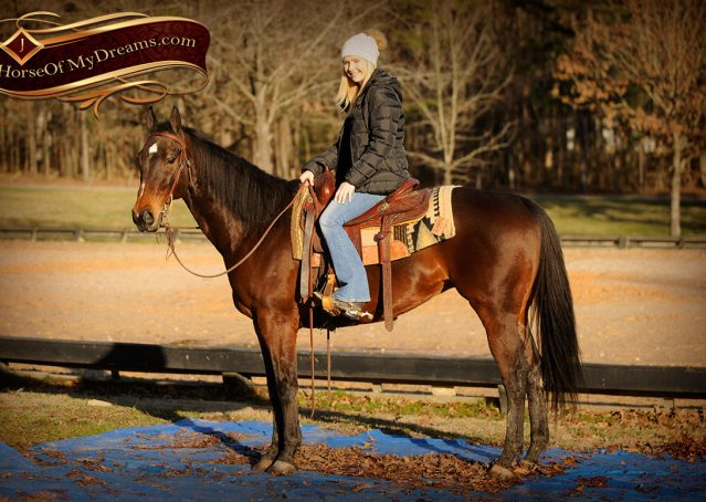 015-Jody-AQHA-Bay-Gelding-For-Sale