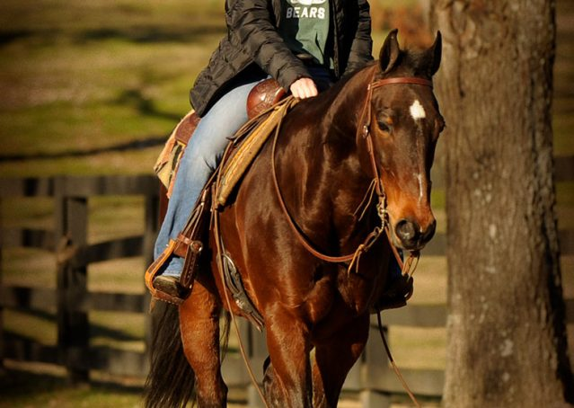 017-Jody-AQHA-Bay-Gelding-For-Sale