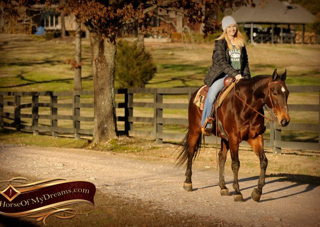 018-Jody-AQHA-Bay-Gelding-For-Sale
