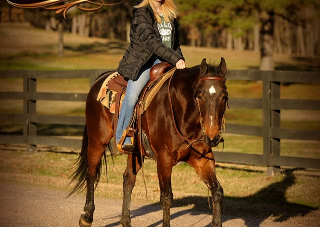 019-Jody-AQHA-Bay-Gelding-For-Sale