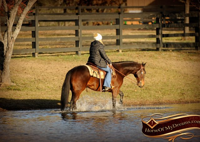 020-Jody-AQHA-Bay-Gelding-For-Sale