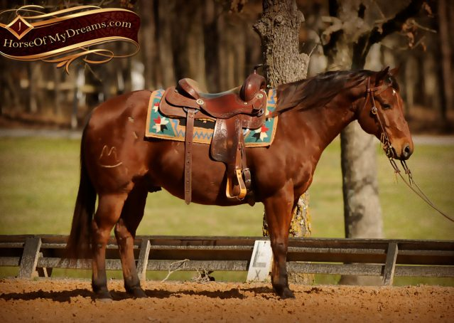 003-Wagner-Bay-AQHA-Gelding-For-Sale