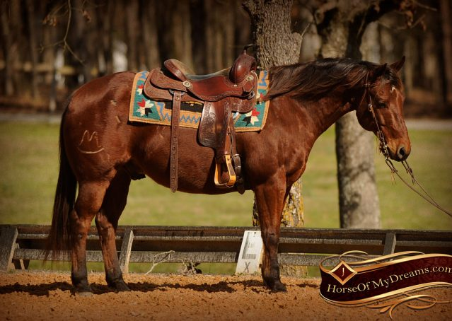 004-Wagner-Bay-AQHA-Gelding-For-Sale