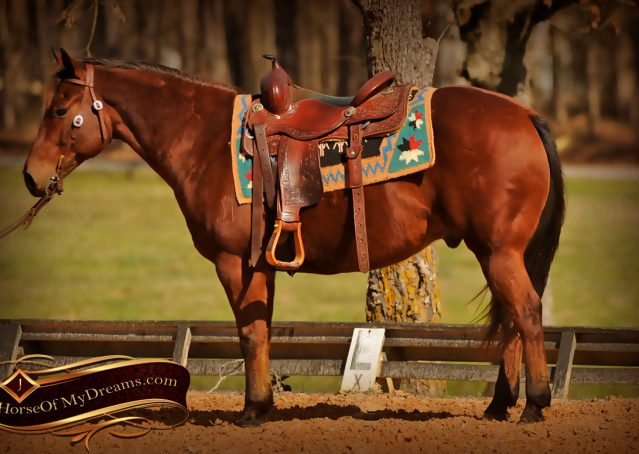 005-Wagner-Bay-AQHA-Gelding-For-Sale