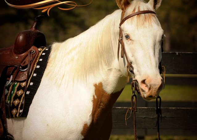 001-Dancer-APHA-Gelding-For-Sale