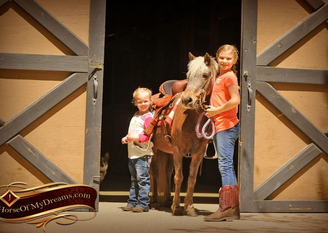001-Peppermint-Chocolate-Palomino-kids-Pony-Mare-For-Sale