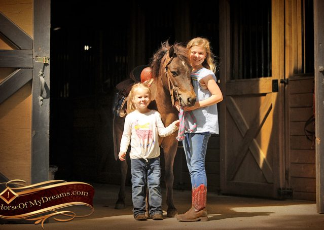 001-Punchy-Bay-Pony-Gelding-For-Sale-Kids-Bombproof