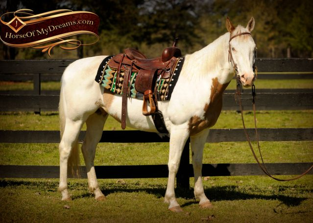 002-Dancer-APHA-Gelding-For-Sale