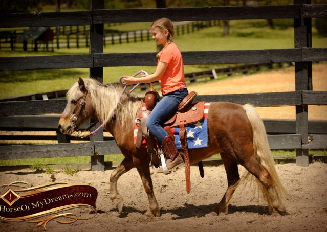 002-Peppermint-Chocolate-Palomino-kids-Pony-Mare-For-Sale