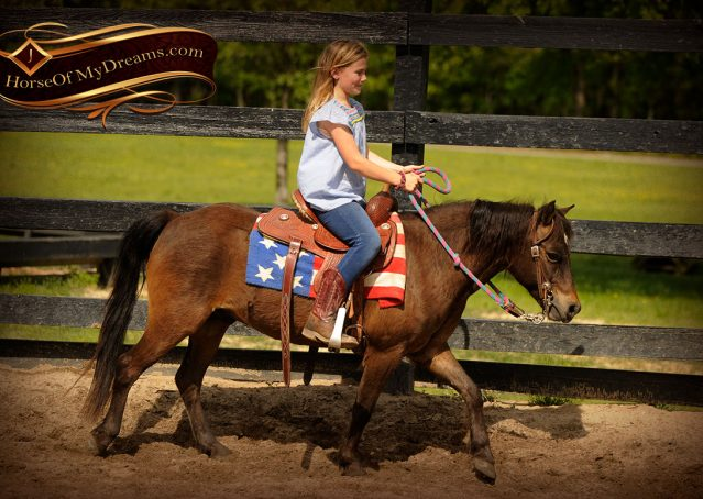 002-Punchy-Bay-Pony-Gelding-For-Sale-Kids-Bombproof