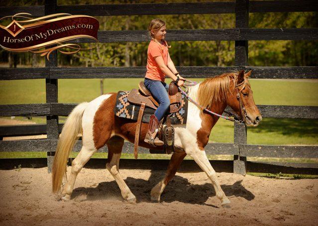 002-Sarah-Lou-Paint-Pony-Mare-For-Sale