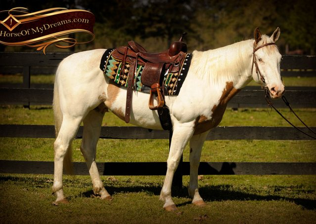 003-Dancer-APHA-Gelding-For-Sale