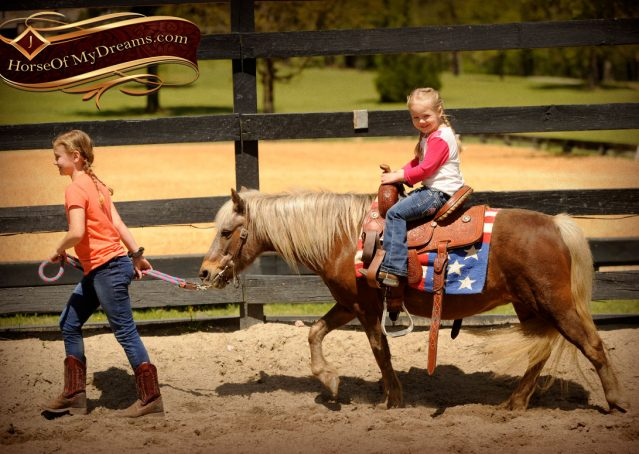 003-Peppermint-Chocolate-Palomino-kids-Pony-Mare-For-Sale