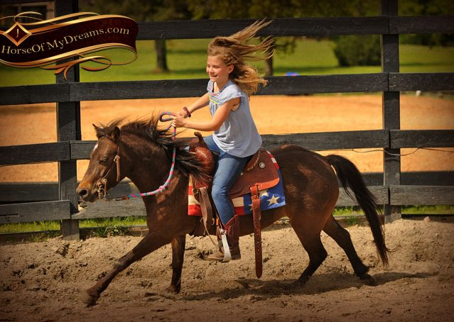 003-Punchy-Bay-Pony-Gelding-For-Sale-Kids-Bombproof