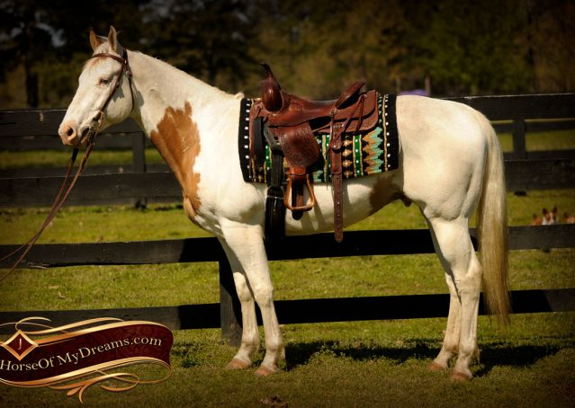 004-Dancer-APHA-Gelding-For-Sale
