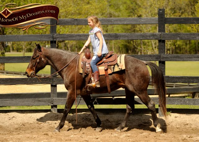 004-Jazz-Bay-Roan-AQHA-Gelding-For-Sale