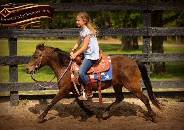 004-Punchy-Bay-Pony-Gelding-For-Sale-Kids-Bombproof