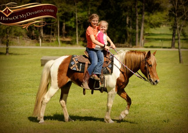 004-Sarah-Lou-Paint-Pony-Mare-For-Sale
