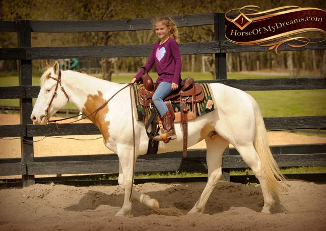 005-Dancer-APHA-Gelding-For-Sale