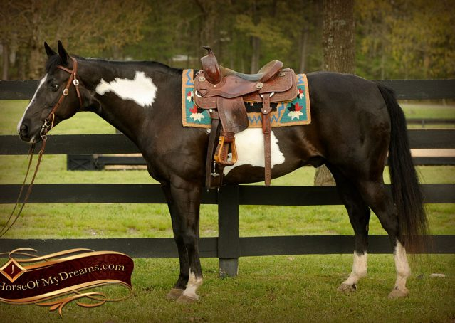 005-Domino-Black-White-Paint-Gelding-For-Sale