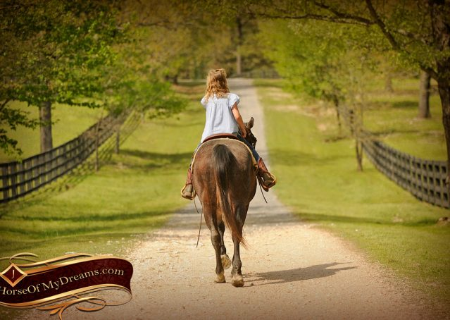 005-Jazz-Bay-Roan-AQHA-Gelding-For-Sale