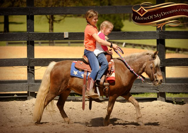 005-Peppermint-Chocolate-Palomino-kids-Pony-Mare-For-Sale